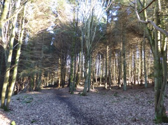 Craigtoun Woods